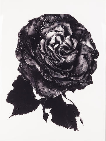 Nick Knight, Black Flower Rose, print