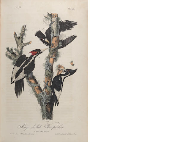AUDUBON, JOHN JAMES. 1785-1851. The Birds of America. New York & Philadelphia: J.J. Audubon & J.B. Chevalier, 1840-1844.