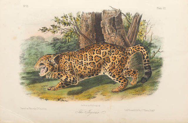AUDUBON, JOHN JAMES. 1785-1851, & JOHN BACHMAN. 1790-1874. The Quadrupeds of North America. New York: V.G. Audubon, [1849]-1851-54.