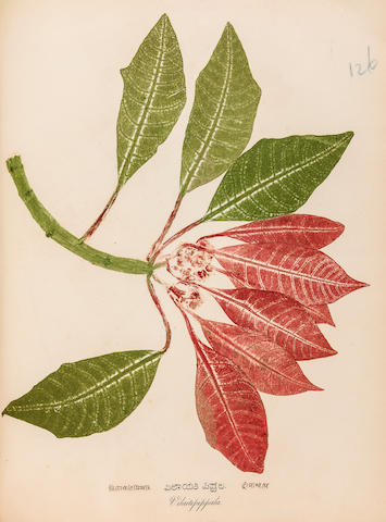 HUNZIKER, JAKOB. B.1831. Nature's Selfprinting: a Series of Useful and Ornamental Plates of the South Indian Flora ... Taken from Fresh Specimens in Facsimile Colors. Mangalore: Botanautographed and Published by J. Hunziker, Basel Mission Press, 1862.