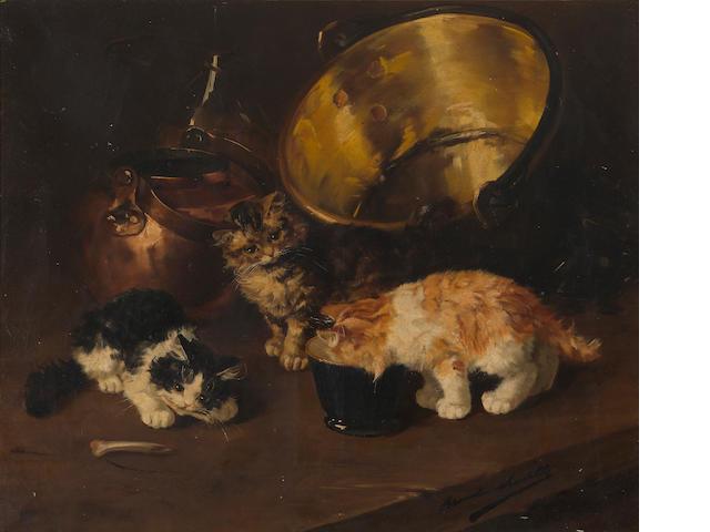 Bernard Neuville? Kittens