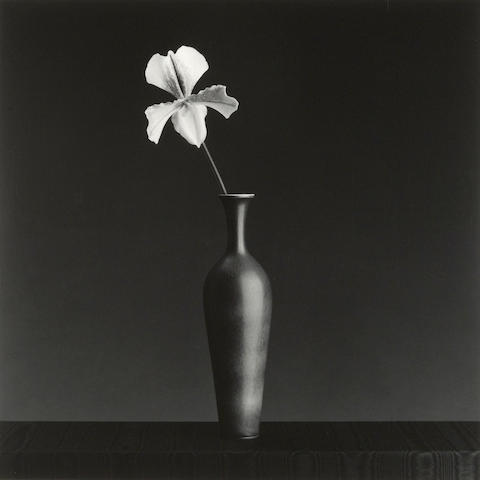 Robert Mapplethorpe (1946-1989); Orchid;
