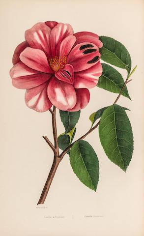 MORDAUNT DE LAUNAY, J.C.M., AND J.L.A. LOISELEUR-DESLONGCHAMPS. 1. Herbier général de l'amateur, deuxième série. Paris: Audot [-H. Cousin], 1839-1844.