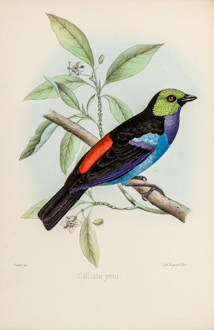 SCLATER, PHILIP LUTLEY. 1829-1913. The Monograph of the Birds forming the Tanagrine Genus Calliste. London: John van Voorst, 1857.