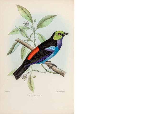 SCLATER, PHILIP LUTLEY. 1829-1913. The Monograph of the Birds forming the Tanagrine Genus Calliste. London: John van Voorst, 1857.<BR />