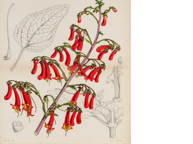 CURTIS, WILLIAM. 1746-1799. The Botanical Magazine; or Flower Garden Displayed. London: for W. Curtis, 1787-1806.<BR />