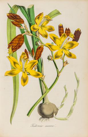 NEUBERT, WILHELM, editor. Deutsches Magazin für Garten- und Blumenkunde. Stuttgart: Hoffmann, et al, 1854-1885.