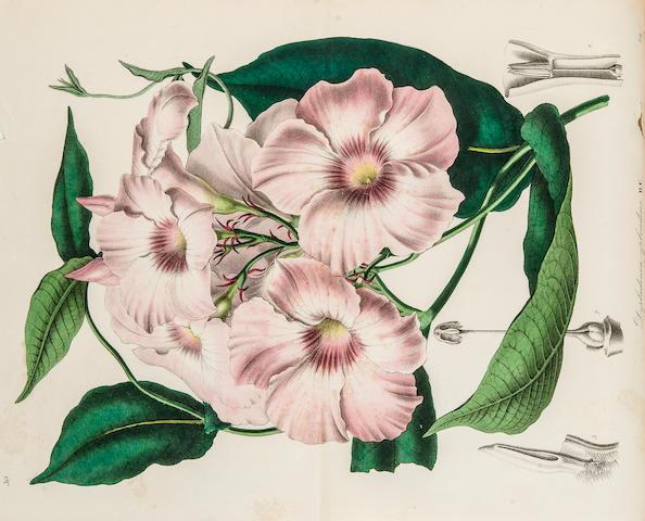 LEMAIRE, CHARLES, et al. Flore des serres et des jardins de l'Europe. Ghent: 1845-1865.