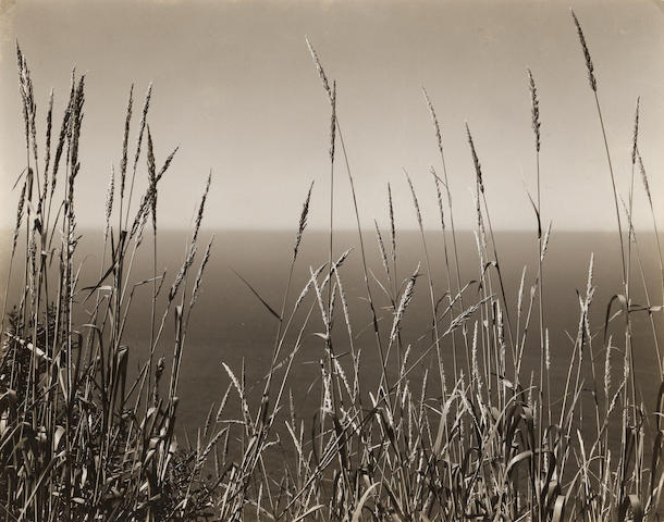 Edward Weston (1886-1958); Grass Against Sea, Big Sur;