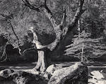 Ansel Adams (American, 1902-1984); El Capitan, Winter, Yosemite National Park; Morning, Merced River Canyon, Yosemite National Park; (2)