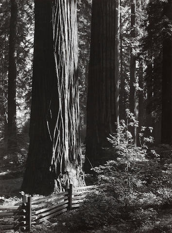 Ansel Adams (1902-1984); Pine Forest Mist, Timber Cove; Redwoods, Richardson Grove; (2)