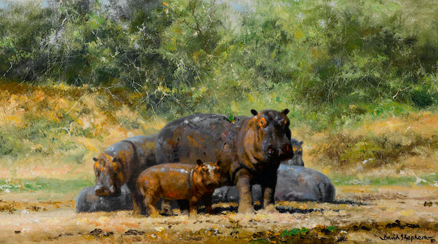 David Shepherd, O.B.E. (British, born 1931) A herd of hippos 9 x 16in (22.8 x 40.7cm)