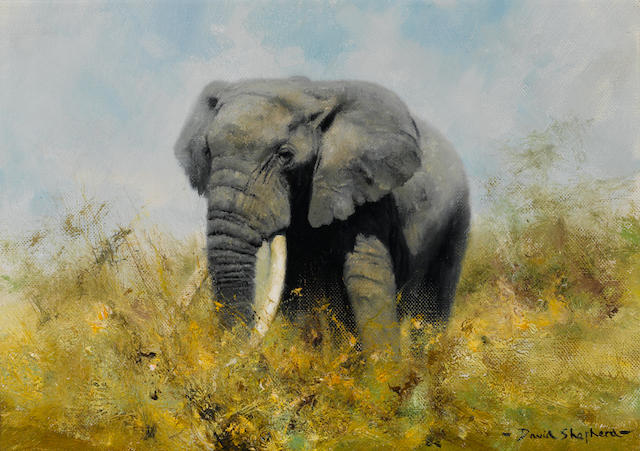 David Shepherd, A study of an elephant, signed, oil on canvas, 10 x 14in