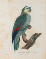A group of eight hand-colored engravings  after Jacques Barraband, Histoire naturelle des perroquets circa 1800