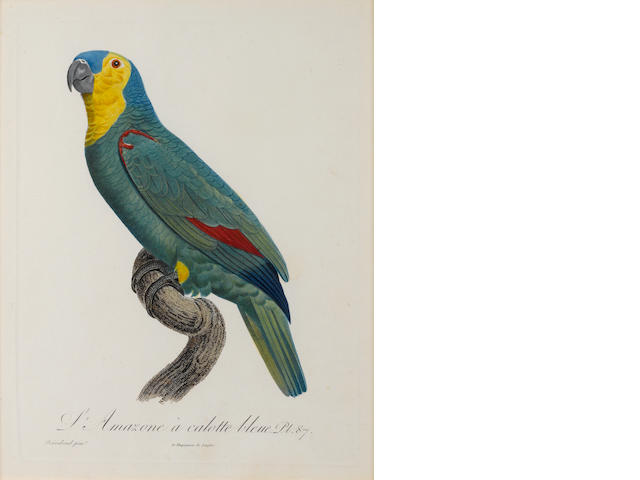 A group of eight colored parrot prints