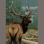 Guy Coheleach, Stag in a wooded landscape, signed, oil on canvas, 30 x 22in