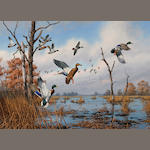 David A. Maass (American, born 1929) Mallards in flight 26 x 36in