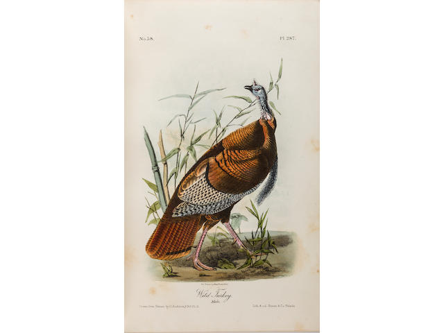 AUDUBON, JOHN JAMES. 1785-1851. The Birds of America, from drawings made in the United States and their territories. New York: George R. Lockwood, late Roe, Lockwood & Son, n.d. [1870-1871].