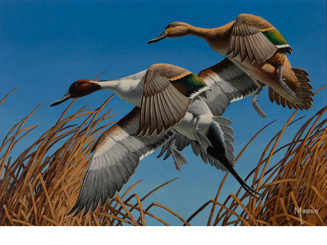 David A. Maass (American, born 1929) Pintails 11 3/4 x 16 1/4in