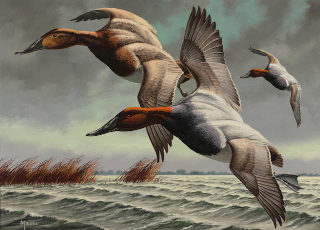 David A. Maass (American, born 1929) Canvasbacks 13 1/4 x 18 1/2in