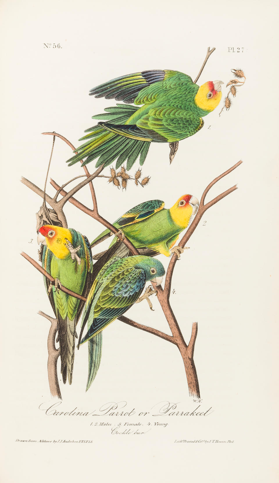AUDUBON, JOHN JAMES. 1785-1851. The Birds of America, from drawings made in the United States and their territories. New York & Philadelphia: Audubon and J.B.Chevalier, [1839]-1840-1844.