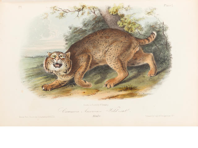 AUDUBON, JOHN JAMES AND JOHN BACHMAN. The Quadrupeds of North America. New York: V.G. Audubon, 1849-51-54.<BR />