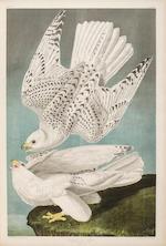 AUDUBON, JOHN JAMES. 1785-1851. The Birds of America, from Original Drawings by John James Audubon....  New York: Roe Lockwood & Son, [1858-]1860.<BR />