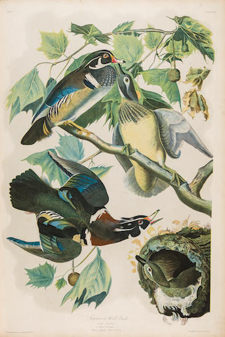 AUDUBON, JOHN JAMES. 1785-1851. The Birds of America, from Original Drawings by John James Audubon.... New York: Roe Lockwood & Son, [1858-]1860.