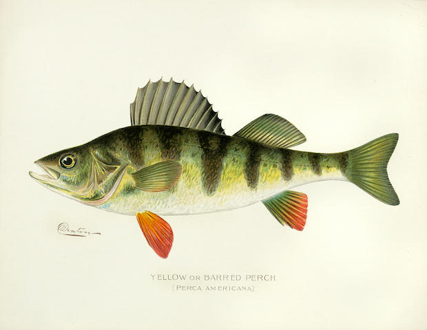 NEW YORK STATE. First [-Sixteenth] Annual Report of the Commissions of Fisheries, Game and Forests of the State of New York. Albany: [1896-1910].<BR />