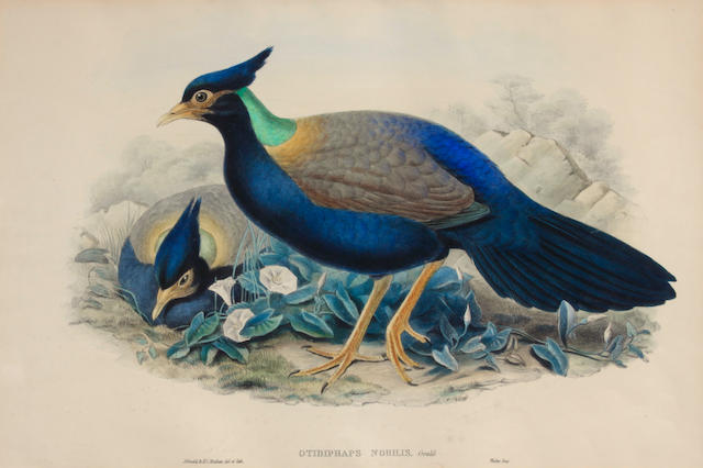 Gould & Richter (British); 5 Plates, from The Birds of Asia; (5)