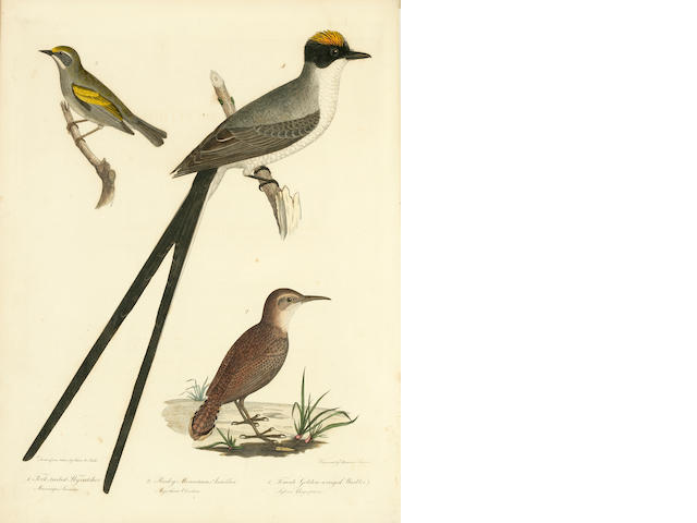 BONAPARTE, CHARLES LUCIEN. 1803-1857. American Ornithology; or, the Natural History of Birds inhabiting the United States not given by Wilson. Philadelphia: S.A. Mitchell; Carey & Lea, 1825-1828-1833.