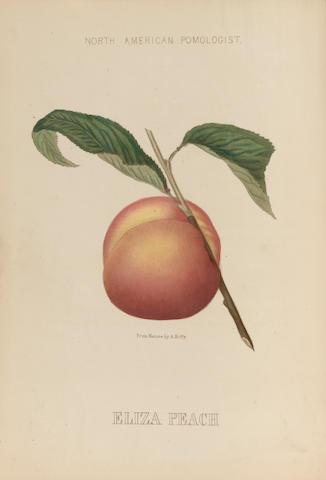 HOFFY, ALFRED A. BRINCKLE, WILLIAM D., editor. Hoffy's North American Pomologist. Philadelphia: A. Hoffy, 1860.<BR />