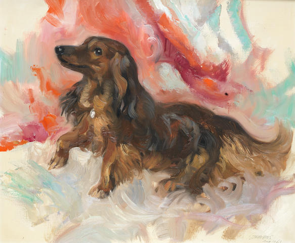 John Strevens (British, 1902-1990) A long haired Dachshund 20 x 24 in. (51 x 61 cm.)
