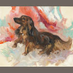 John Strevens (British, 1902-1990) A long haired Dachshund 20 x 24in. (51 x 61cm.)