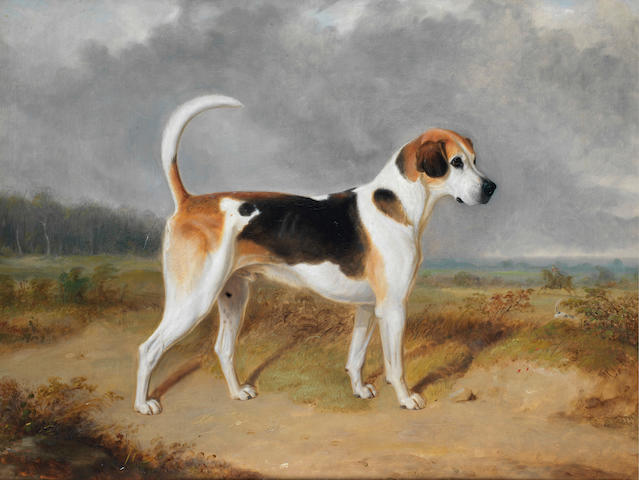 Attributed to William Webb (British, 1780-1846) Portrait of a Foxhound with a hunt in the background 27 3/4 x 35 3/4 in. (70.5 x 91 cm.)