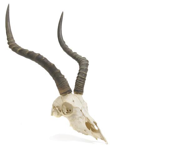 A Skull Trophy