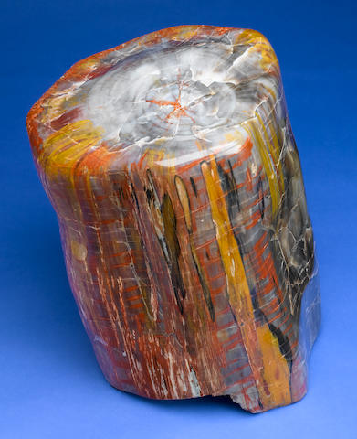 Rare Black Petrified Wood Stump