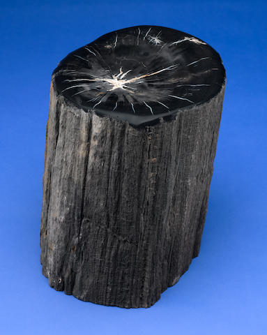 Black Petrified Wood Red and Black Specimen