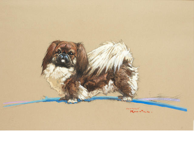 Harry Rowntree (British, 1878-1950) A Pekingese 11 x 16 in. (28 x 40.5 cm.)