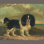 English School, 19th century King Charles Spaniels, a pair 7 3/4 x 10in. (19.5 x 25.5cm.) each