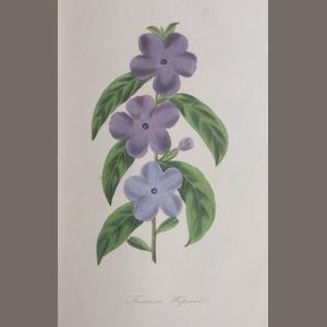 PAXTON, JOSEPH. 1801-1865. The Magazine of Botany, and Register of Flowering Plants. London: Orr and Smith, et al, 1834-1843.