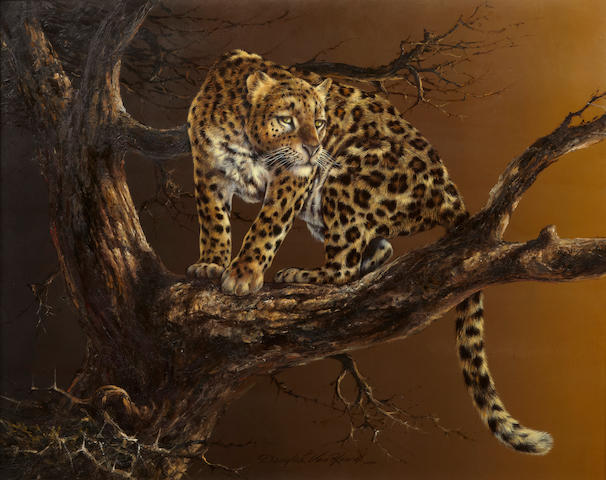Douglas van Howd (American, born 1935) Leopard in a tree, signed, oil on board, 22 1/2 x 28in