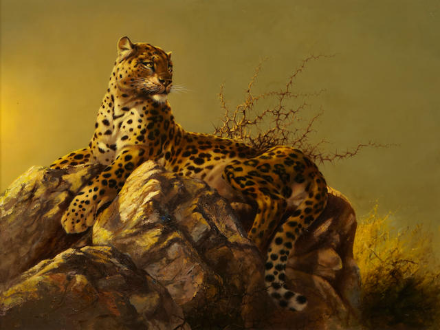Douglas van Howd (American, born 1935) Leopard on a rocky perch 32 x 42in