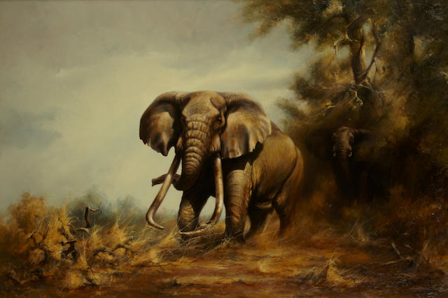 Douglas van Howd, Elephants, signed (lower right), 34 x 50in