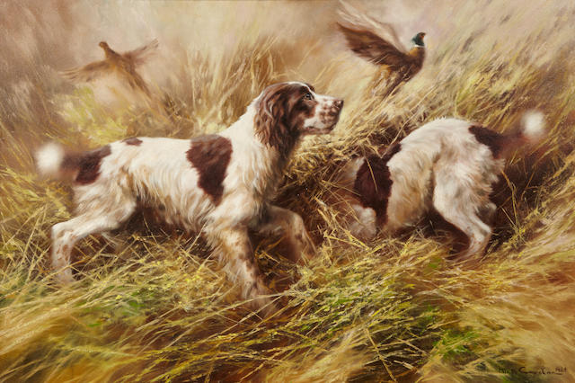 Mick Cawston (British, born 1959) Springer Spaniels and pheasants 24 x 36 in. (60.9 x 91.4 cm.)