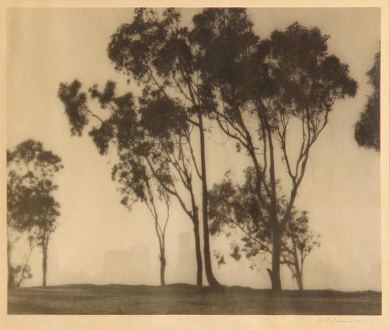 William E. Dassonville (American, 1879-1957); Eucalyptus Trees and San Francisco Skyline;