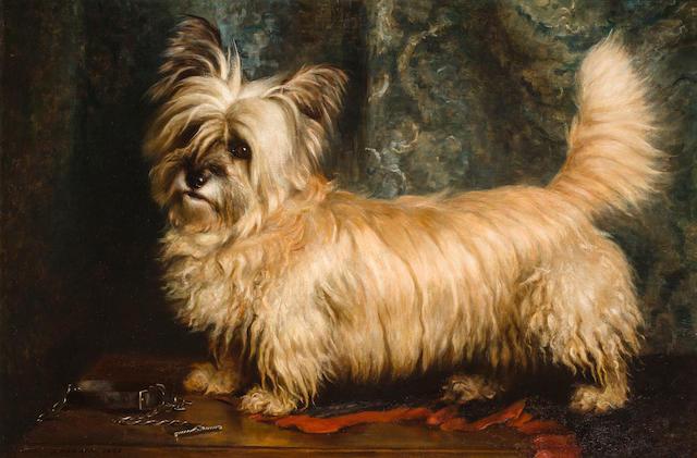 Nellie Hadden (British, ?-died circa 1917) Portrait of a Skye Terrier 24 x 36 in. (61 x 91.4 cm.)