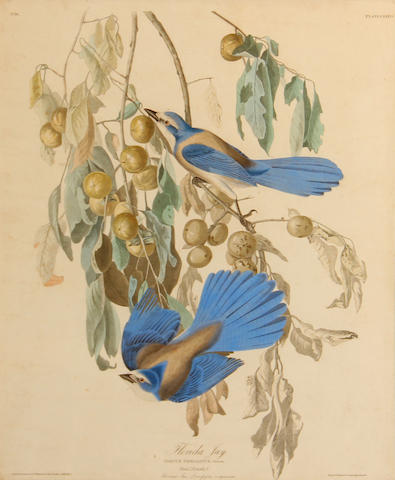After John James Audubon (American, 1785-1851); Florida Jay, Pl. LXXXVII;