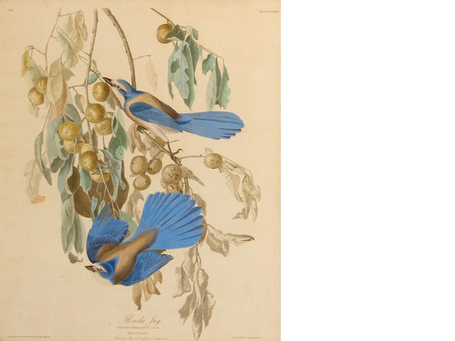 After John James Audubon (American, 1785-1851); Florida Jay, Pl. LXXXVII;
