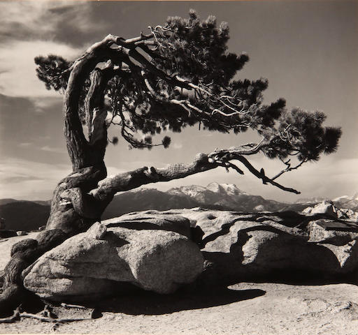 Ansel Adams (American, 1902-1984); Jeffrey Pine, Sentinel Dome, Yosemite National Park;